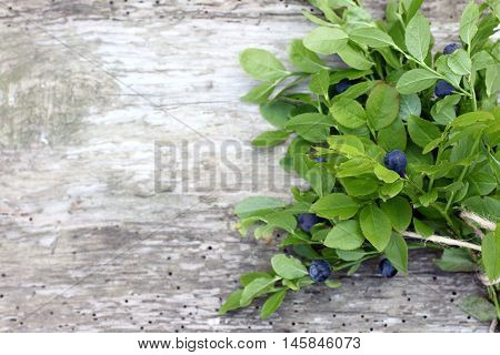branches forest blueberries on a very old wooden surface top view / bunch forest blueberries