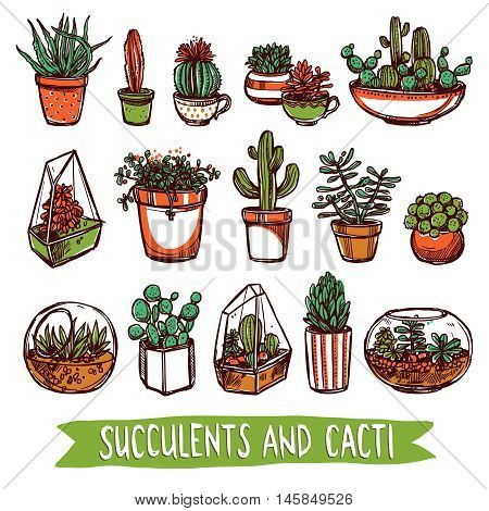 Succulents And Cacti Color Sketch Style Set