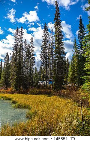 Coniferous forest on the shore of a mountain lake. Emerald Lake, Canada, Yoho National Park