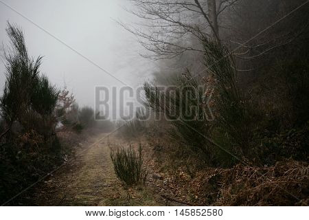 Landscape. Foggy path on the Mediterranean mountain forest. Bad view in a forest. Easy to get lost. Travel safe