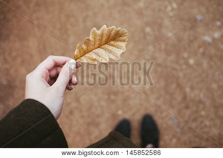 Dry oak leave in a hand. Nature details