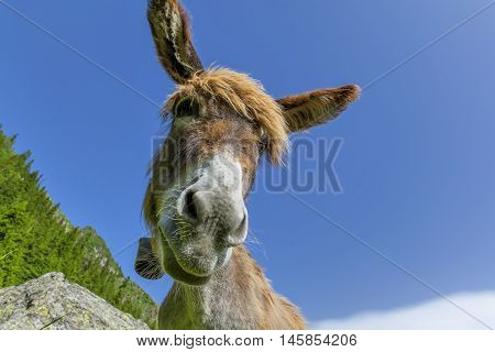 Donkey with big ears against blue sky