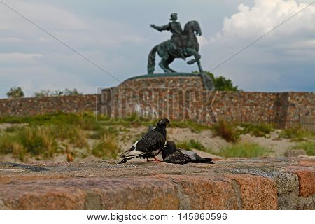 Baltiysk Russia - August 2 2016: The doves on the background of the monument to Russian Empress Elizabeth in Baltiysk