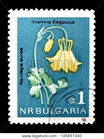 BULGARIA - CIRCA 1970 : Cancelled postage stamp printed by Bulgaria, that shows Aquilegia aurea Janka.