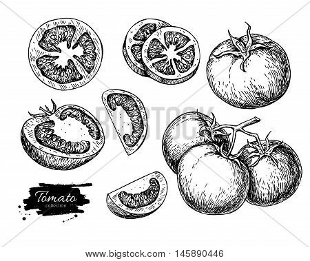 Tomato vector drawing set. Isolated tomato sliced piece vegetables on branch. Engraved style illustration. Detailed vegetarian food sketch. Farm market product.