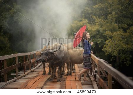 Thai woman wearing typical Thai dress on bridge and Buffalo background identity culture of Thailand