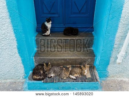 Door with cats in the traditional village of Mandraki, Nisyros island, Greece