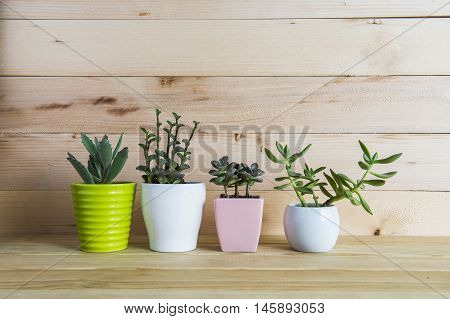 Indoor plant on wooden table and wall