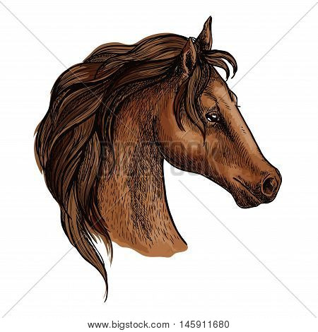 Horse head profile portrait. Proud brown mustang with long wavy mane and thoughtful pensive eyes