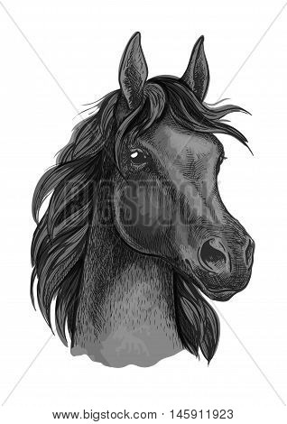 Black horse portrait with shiny dark eyes. Beautiful mustang with thick mane waving in wind