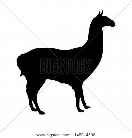 Lama profile black silhouette vector illustration isolated