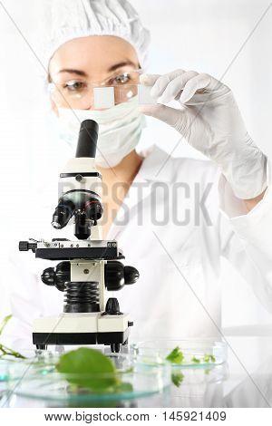 Biotechnology in plant breeding. Genetic engineering in plant breeding. Laboratory testing plant samples.