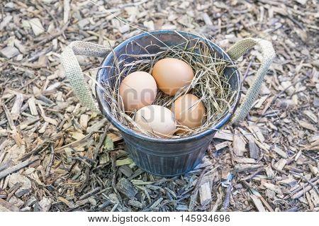 Freshly Laid Brown Eggs Nestled in Hay in a Bucket