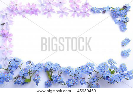 Frame with flowers forget-me-not and phlox on a white background.
