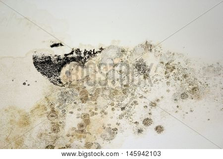 black mold on white old plaster chetomium