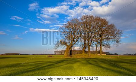 Big Trees On A Tumulus Grave Mound In Bright Colors