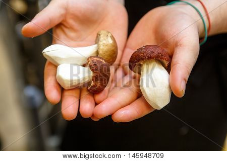 Mushrooms in the hands of chefs in a restaurant kitchen.