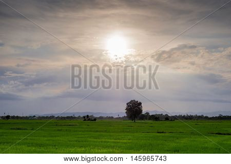 Evening Sun shines on the field in coutry town