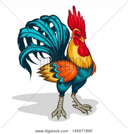 Vector color illustration of a rooster standing half-turned. Cock symbol 2017 year
