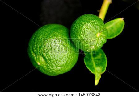 Bergamot Orange Hanging Fruits With Leaf Isolated On Black Background