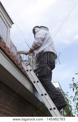 pest controller on ladder removes wasp nest under roof tiles