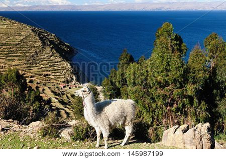 Bolivia - Isla del Sol on the Titicaca lake the largest highaltitude lake in the world (3808m) This island's legendary Inca creation site and the birthplace of the sun. Landscape of the Titicaca lake