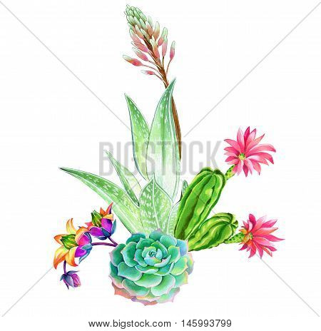 beatiful succulent composition: aloe, aeonium and cactus. Watercolor illustrations of green garden plants blossoming. Trendy succulent design for cards, holidays, weddings, fashion poster