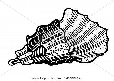 Hand Drawn seashell. aquatic doodle vector illustration. Sketch for tattoo or makhenda. Seashell collection. Ocean life.