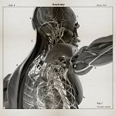 Human anatomy. 3D illustration. Torso, shoulder, muscular and vascular system. Dissected layers. poster