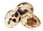 Three quail eggs isolated on white super macro view extremely high depth of field poster