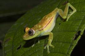 Grüne Frosch über Jump