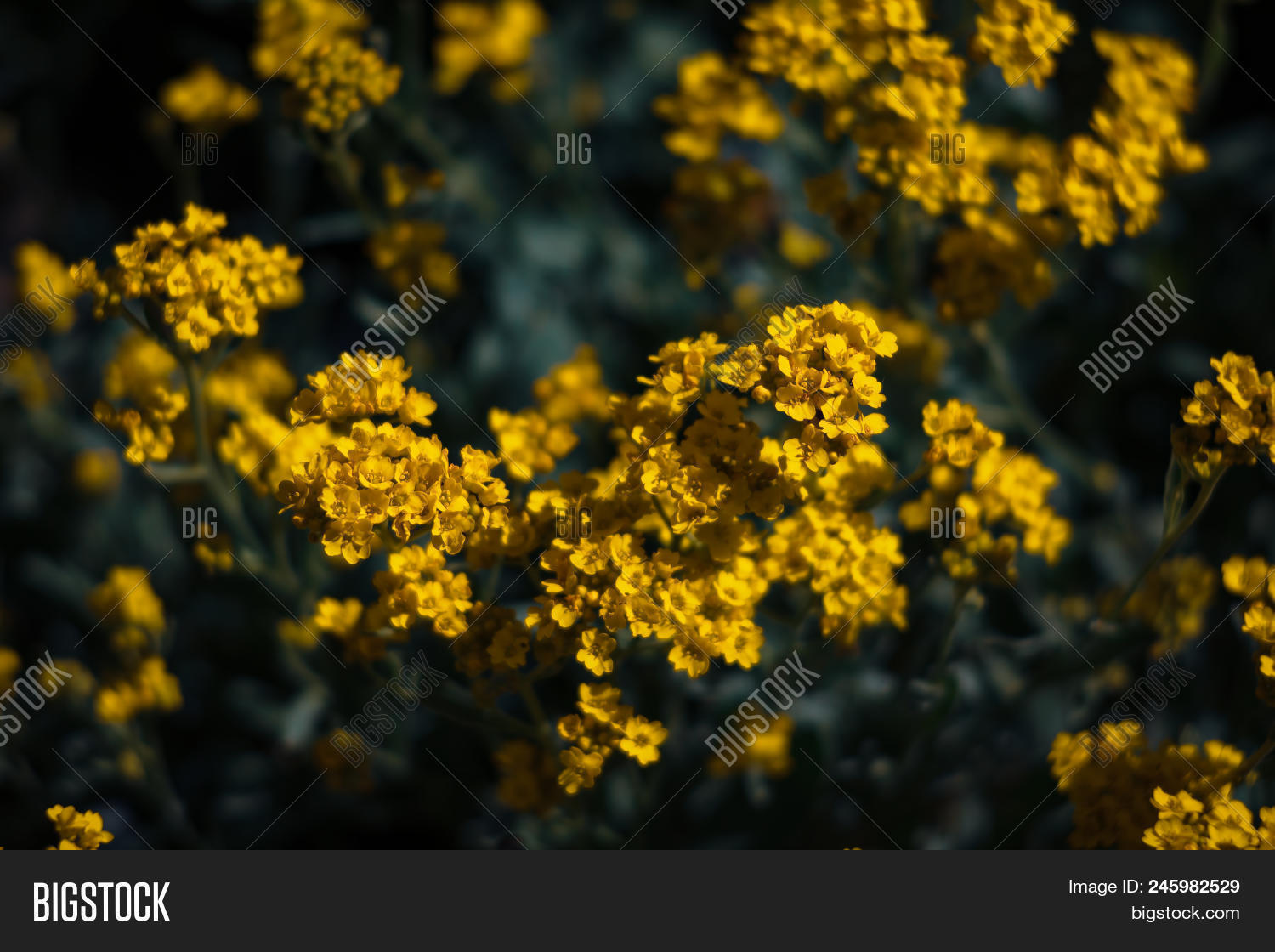 Small Yellow Flowers Image Photo Free Trial Bigstock