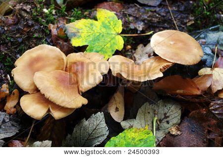 Uneatable Mushrooms