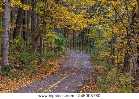 Bike Trail In Forest In The Fall