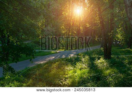 Picturesque Sunny Summer Landscape - Summer Park Alley At Sunset. Sunny Summer Park Landscape, Color