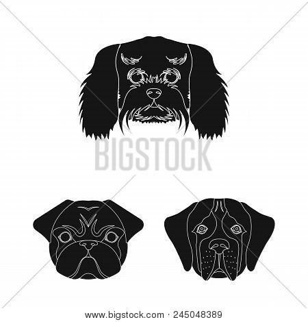 Dog Breeds Black Icons In Set Collection For Design.muzzle Of A Dog Vector Symbol Stock  Illustratio