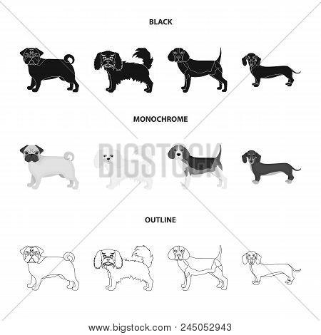 Dog Breeds Black, Monochrome, Outline Icons In Set Collection For Design.dog Pet Vector Symbol Stock