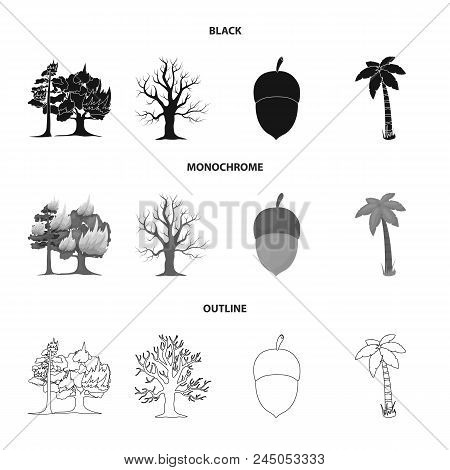 Burning Tree, Palm, Acorn, Dry Tree.forest Set Collection Icons In Black, Monochrome, Outline Style