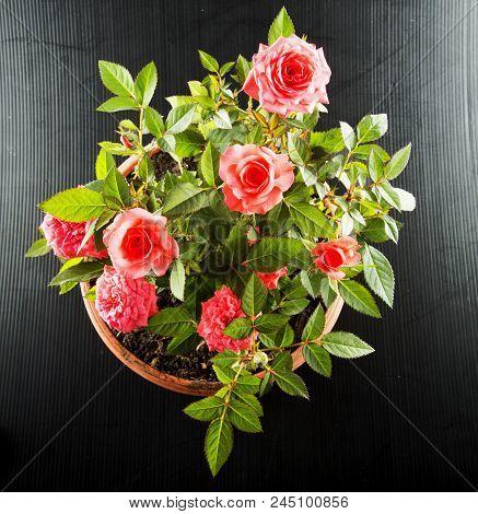 Pink Roses Flowerpot