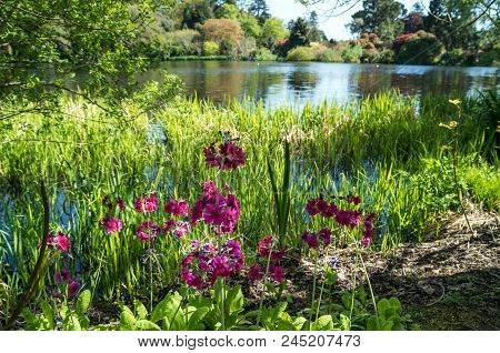 A Pretty Image Of Pink Flowers At The Edge Of A Stunning Lake.
