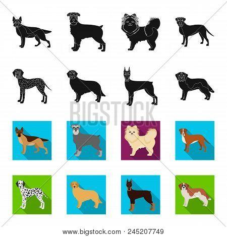 Dog Breeds Black, Flet Icons In Set Collection For Design.dog Pet Vector Symbol Stock  Illustration.