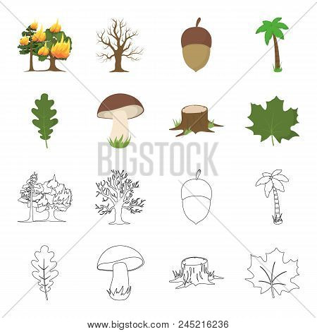 Oak Leaf, Mushroom, Stump, Maple Leaf.forest Set Collection Icons In Cartoon, Outline Style Vector S