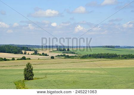 .noon In June. Expanses. The Belarusian Landscape. Horizon Space. Beautiful View Of The Fields And C