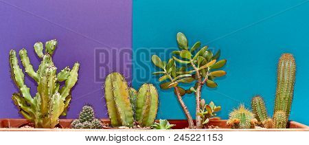 Cactus. Art Gallery Fashion Design. Minimal Stillife. Blue Mood. Trendy Bright Summer Colors. Creati