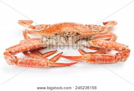 Close-up View Of Boiled Blue Crab Isolated On White Background