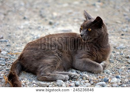 Portrait Of Feral Grey-brown Cat In The Countryside. Photography Of Nature And Wildlife.