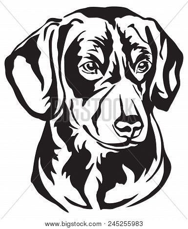 Decorative Portrait In Profile Of Entlebucher Mountain Dog, Vector Isolated Illustration In Black Co