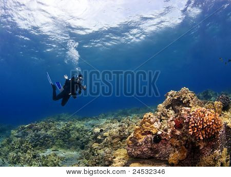 Diver Checking Out The Coral In Hawaii