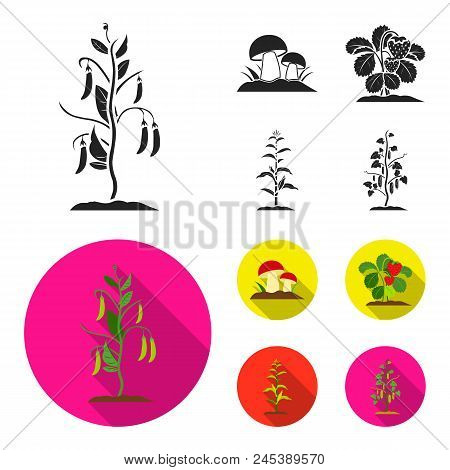 Mushrooms, Strawberries, Corn, Cucumber.plant Set Collection Icons In Black, Flat Style Vector Symbo