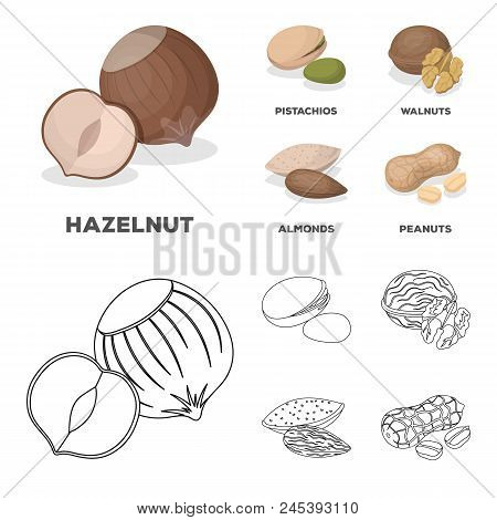 Hazelnut, Pistachios, Walnut, Almonds.different Kinds Of Nuts Set Collection Icons In Cartoon, Outli